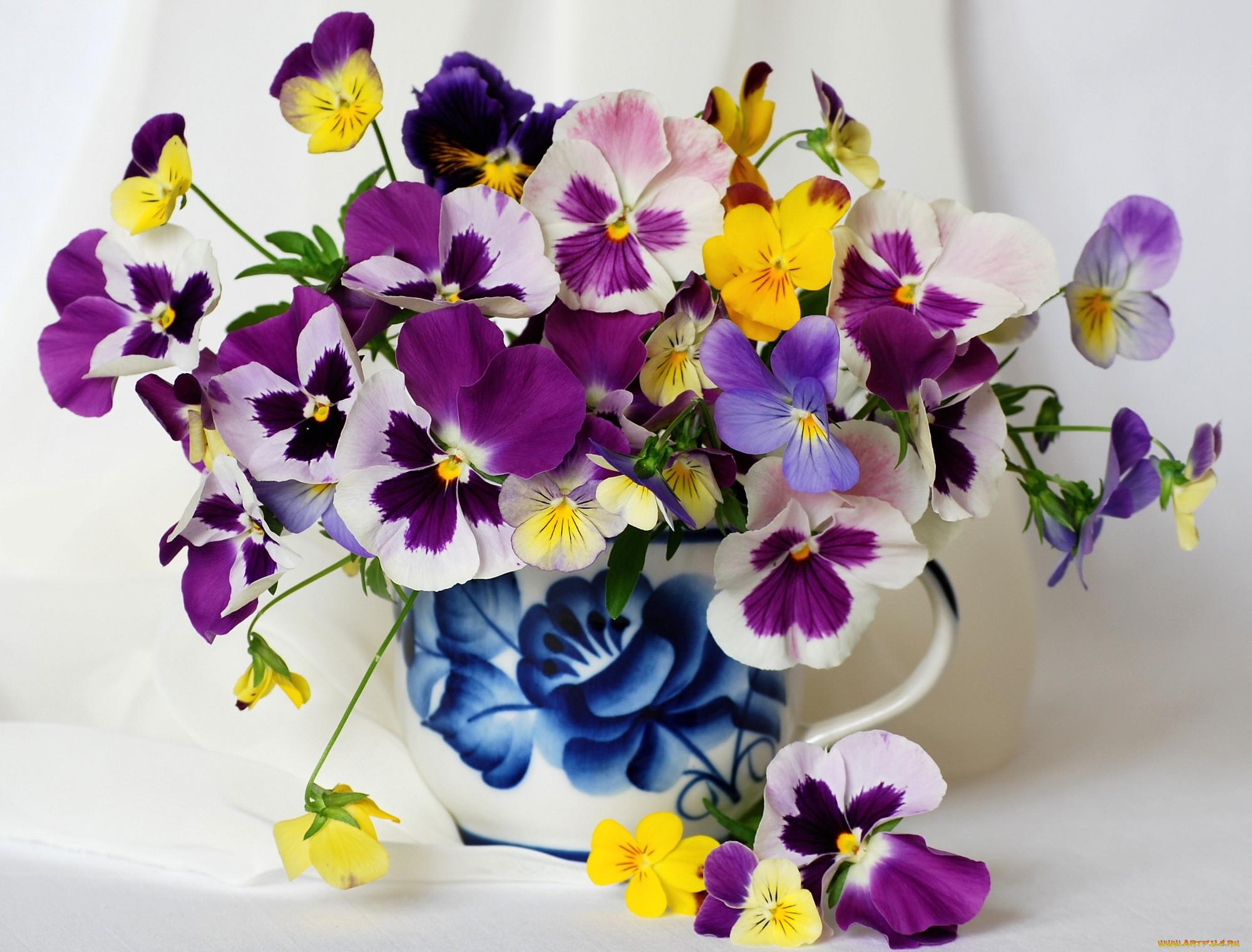 картинки с цветами красивые фиалка подготовить